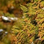 スギ花粉症はいつから いつまで?つらい症状の時期と対策法